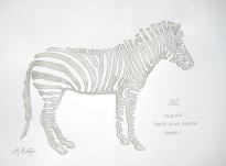 Zoe, albino Zebra, Three Ring Ranch, Hawaii. Single continuous line drawing, Mick Burton.