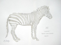Zoe, albino Zebra, Three Ring Ranch, Hawaii. Single continuous line drawing, Mick Burton.