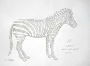 Zoe, albino Zebra, Three Ring Ranch, Hawaii