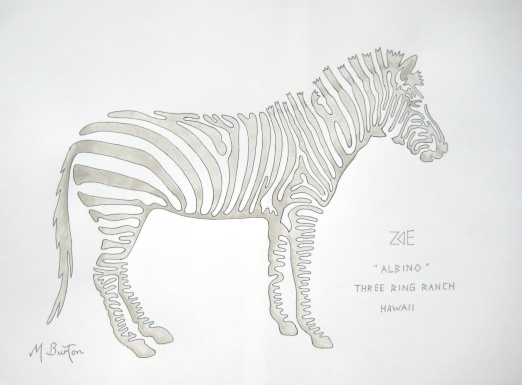 Zoe, albino Zebra, Three Ring Ranch, Hawaii