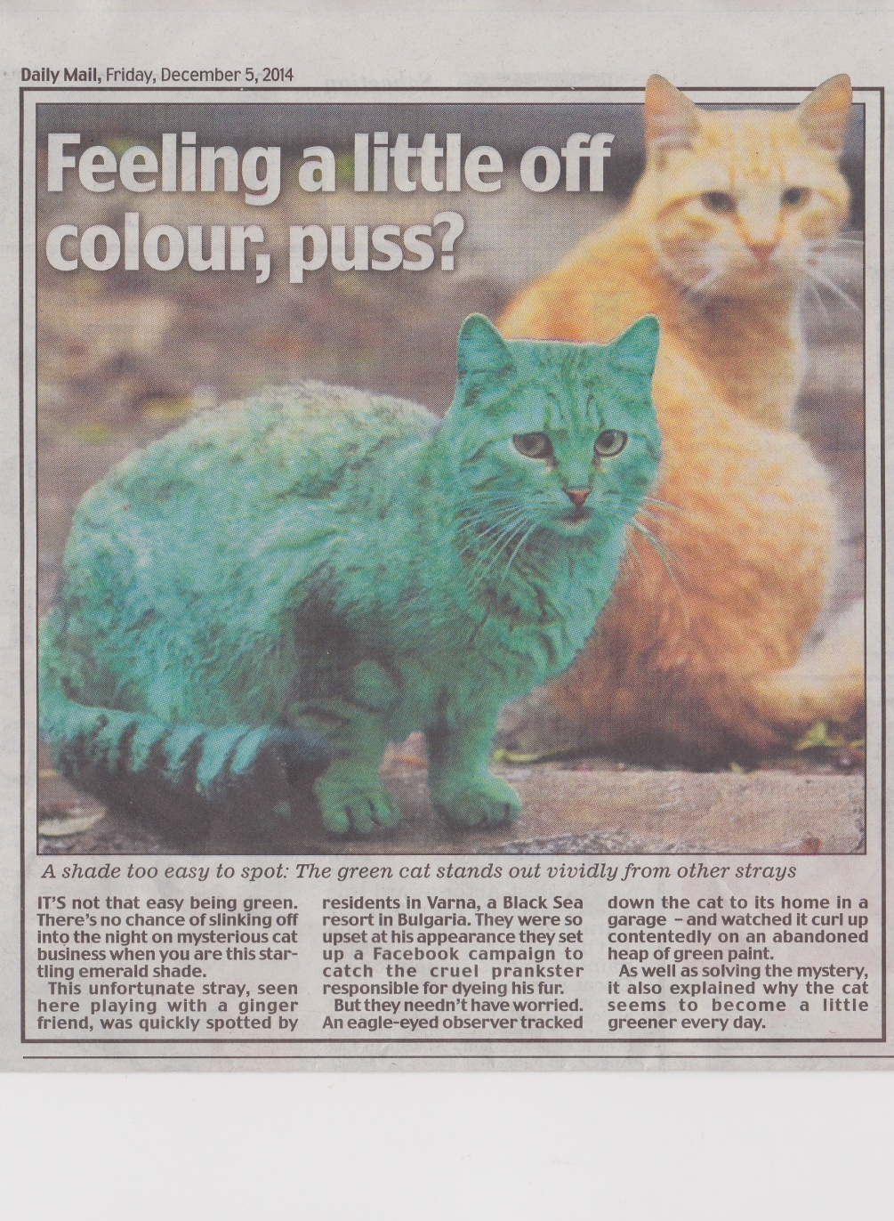 Cat who slept on a heap of old green paint. Daily Mail, December 5, 2014.  Mick Burton, continuous line drawing.