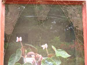 Three cobwebs, on another dining room window, covered in red brick dust in 2009. Mick Burton, continuous line artist.