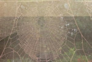Large cobweb, on third dining room window, covered in red brick dust after work on kitchen extension in 2009. Mick Burton, continuous line artist.