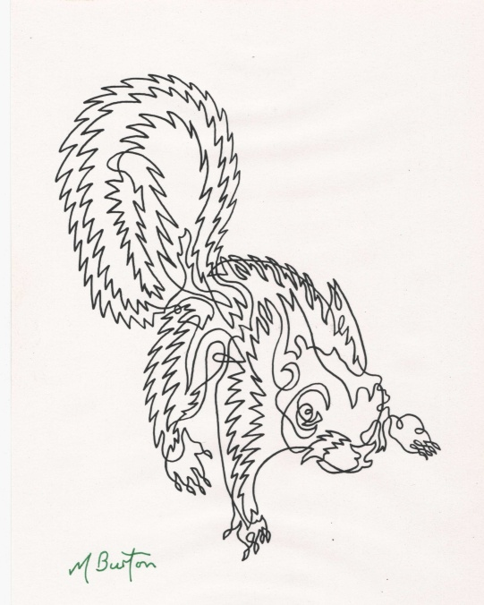 Continuous line squirrel from 1970, with shimmering effect of fur. Mick Burton, Leeds artist.