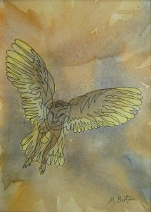 Continuous line drawing of Barn Owl onto Wet on Wet watercolour. Mick Burton.